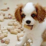 puppy with wine corks