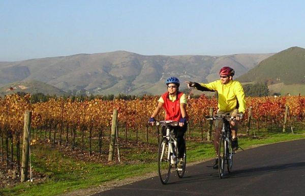 bicyclists through vineyards