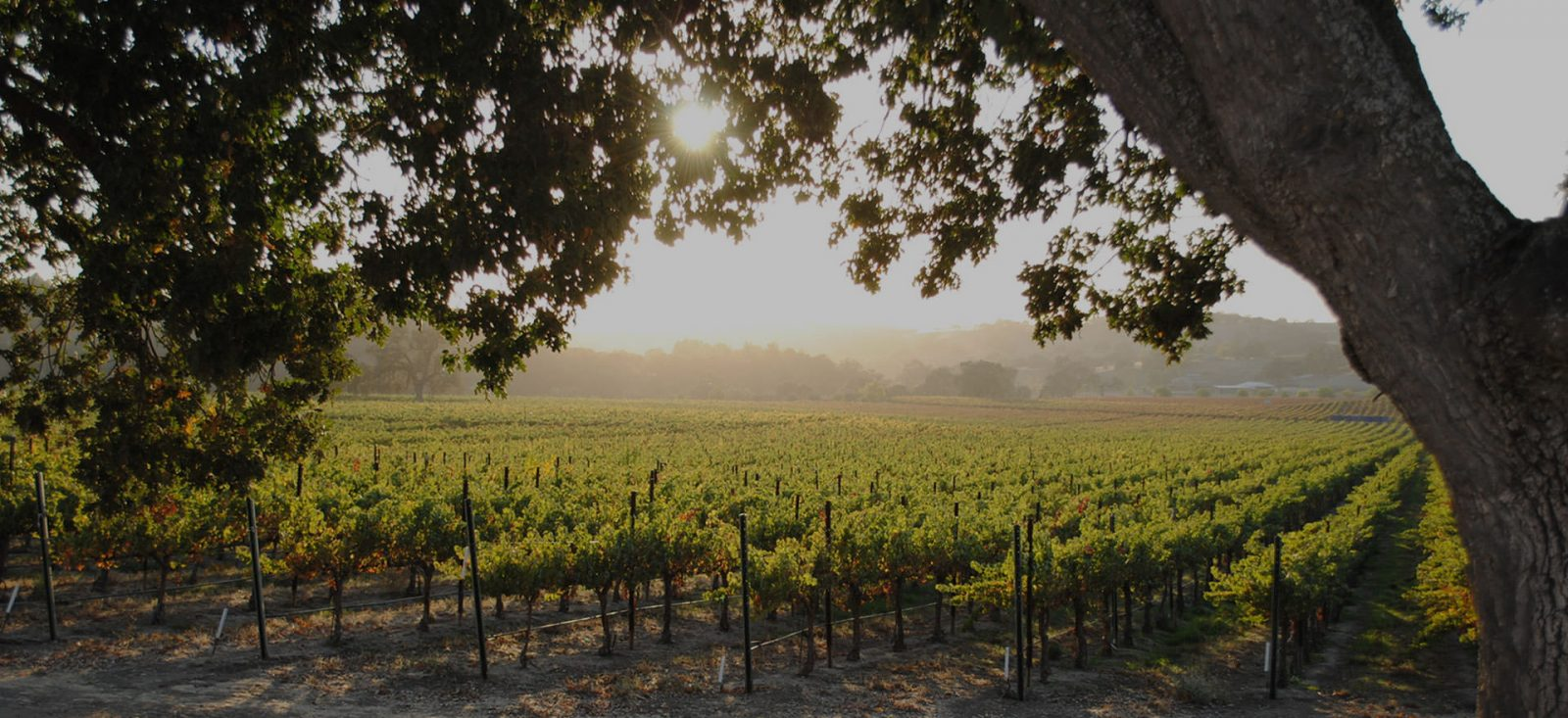 Paso Robles hotels
